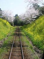 いすみ鉄道に乗って_c0168433_7154816.jpg