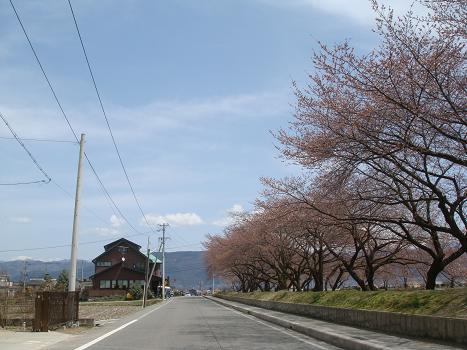 安曇野の桜は_a0014840_2215881.jpg
