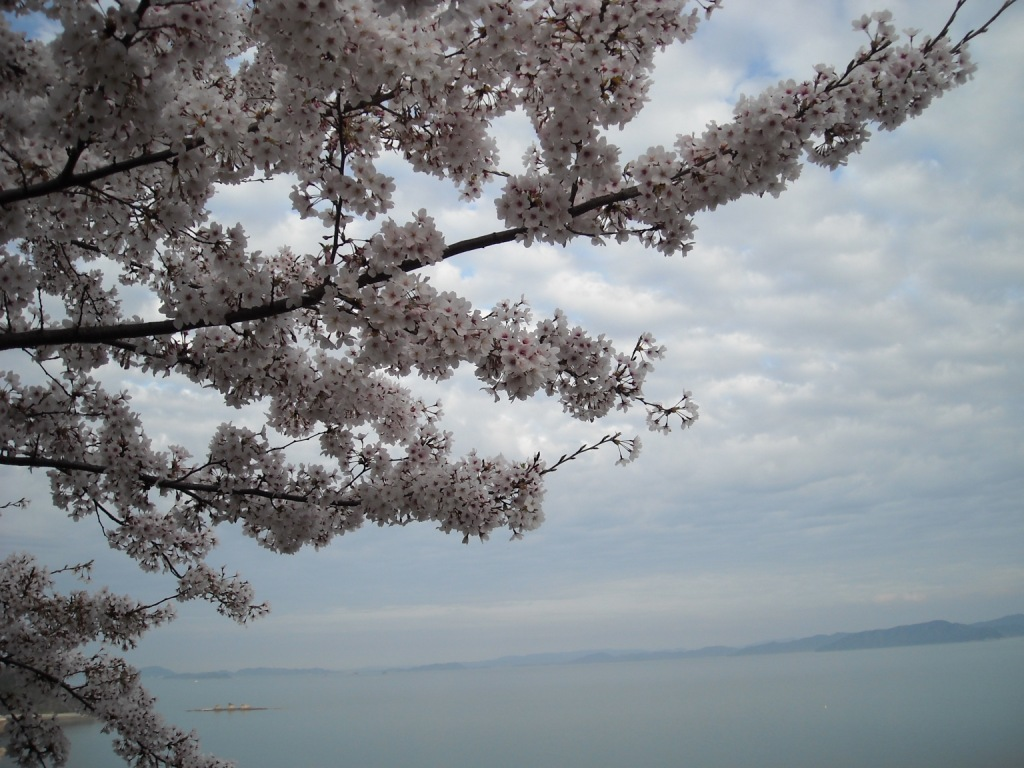 展望台の桜_f0184247_18543524.jpg