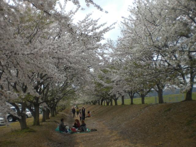 桜・・・・・_b0152548_14462098.jpg