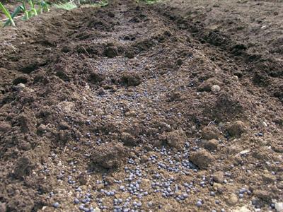 高畝深植黒マルチ農法_c0063348_6595787.jpg