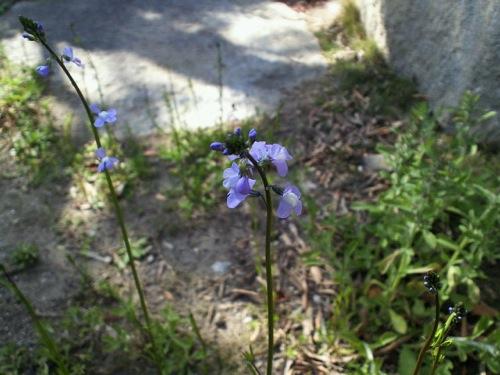我が家の庭の草花_f0054859_19523917.jpg