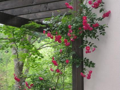 バラの庭を夢見て~_f0236260_14304652.jpg