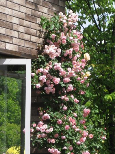 バラの庭を夢見て~_f0236260_14325559.jpg