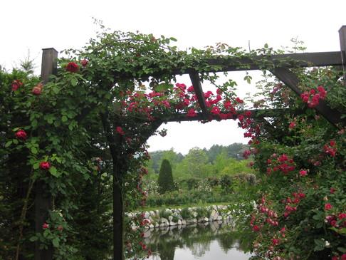 バラの庭を夢見て~_f0236260_1501547.jpg