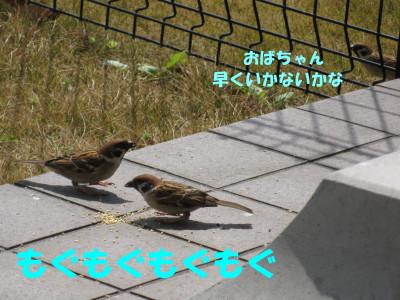 b0158061_2004648.jpg