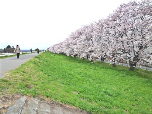 熊谷のさくら♪_c0184769_10443973.jpg