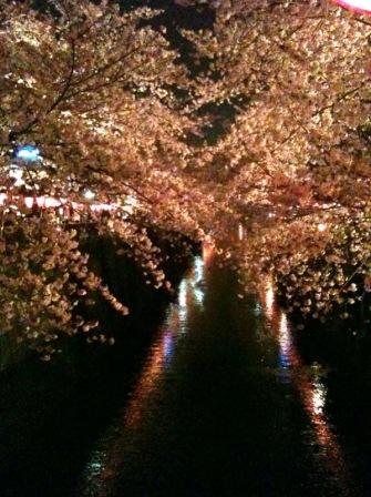 夜桜_a0031191_12415.jpg