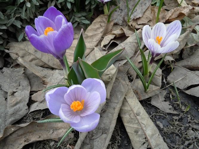 春の風物 我が家編_d0085096_1952275.jpg