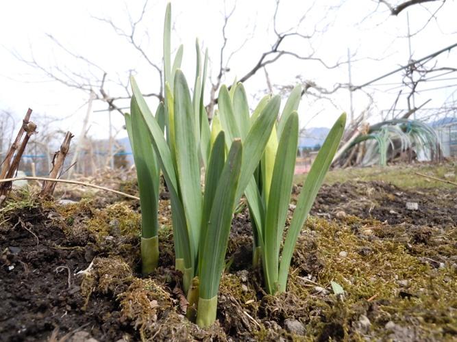 春の風物 我が家編_d0085096_199358.jpg