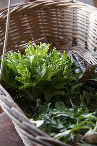 春の畑の収穫物は美味しいサラダ菜!~4月の畑_f0106597_15515761.jpg