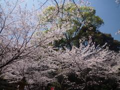 お花見。_f0216098_223877.jpg