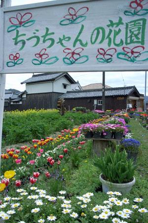 ちづちゃんの花園_d0090101_1035212.jpg