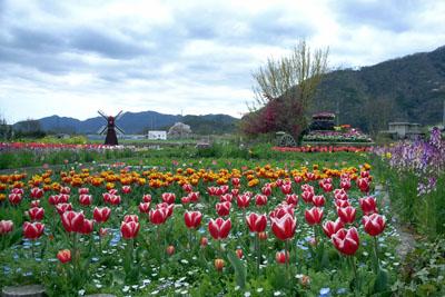 ちづちゃんの花園_d0090101_10353145.jpg