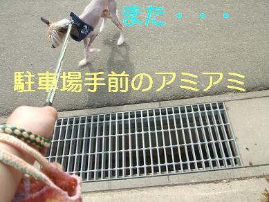 f0179203_836656.jpg