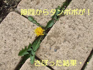 f0179203_9555240.jpg