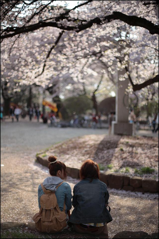 Sakura image 2010_e0022810_23354612.jpg