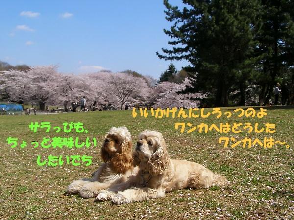 b0067012_2202587.jpg
