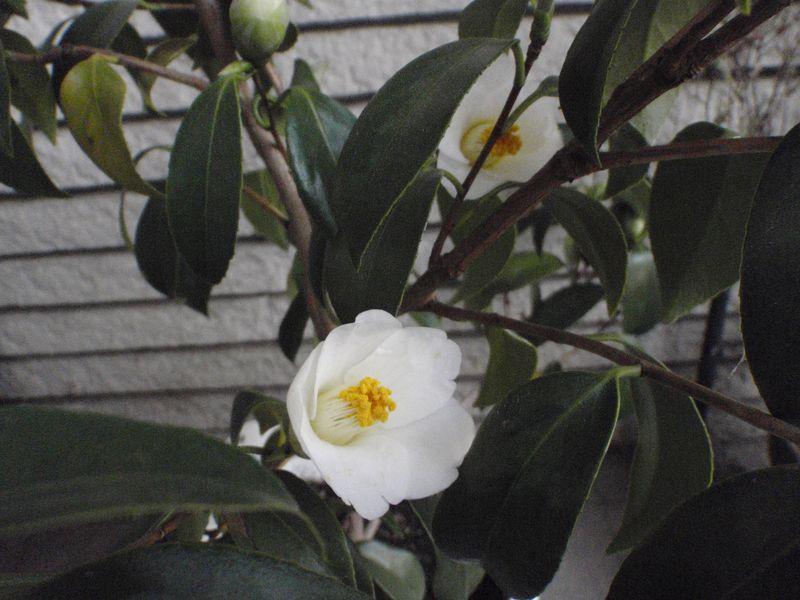 残雪最終日_c0025115_229587.jpg