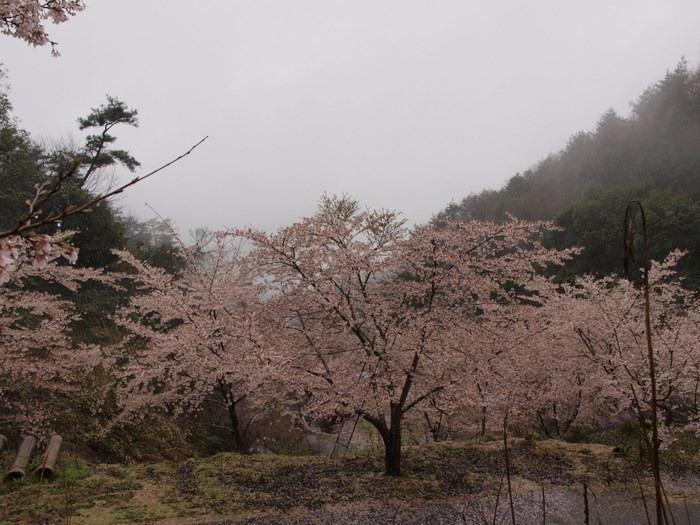 六地区の町内会合同お花見_c0116915_2215568.jpg