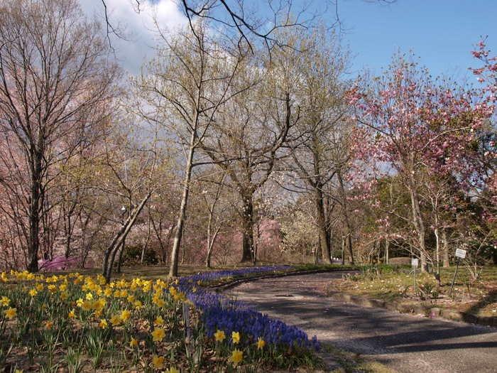 広島市植物公園の春の小道と桜など。。_c0116915_2355814.jpg