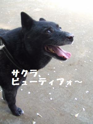 a0147921_0181285.jpg