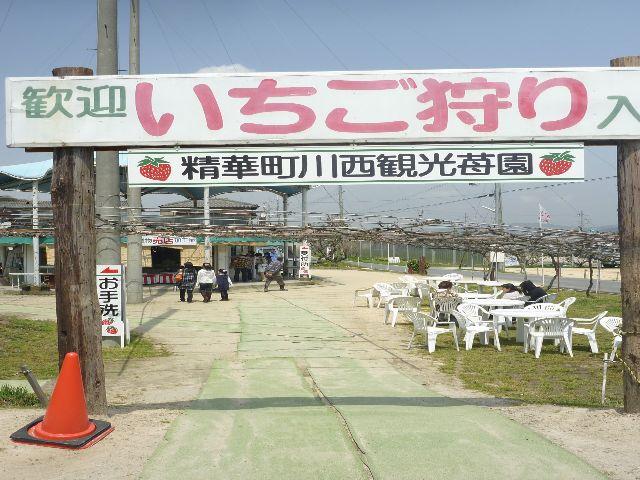 精華町 川西苺園と大仏の鼻の穴くぐり_b0054727_2055477.jpg