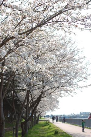 春の公園_e0195830_813417.jpg