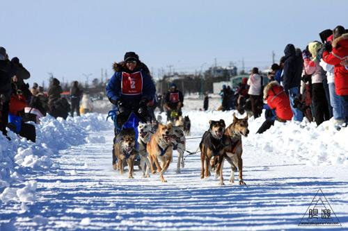 034 Yellowknife ~犬ぞりレースと丘探検~_c0211532_12321733.jpg