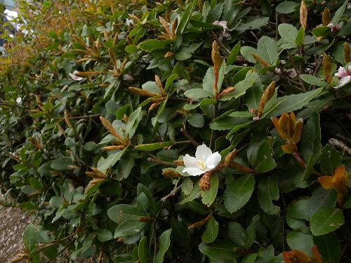 昨日撮った桜_e0089232_15293513.jpg