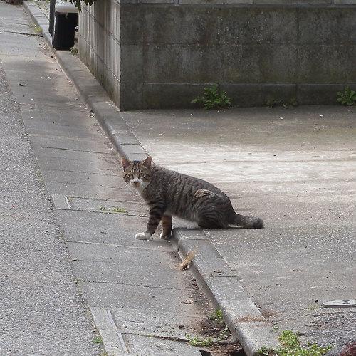 道端でばったり猫に_e0089232_15351165.jpg