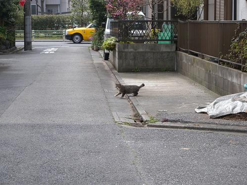 道端でばったり猫に_e0089232_1535587.jpg