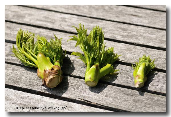 タラの芽とグリーンアスパラガス 〜 春の食材 〜_d0069838_11443375.jpg