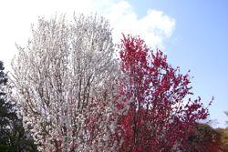 春の色_a0068339_875764.jpg