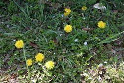 春の色_a0068339_881015.jpg