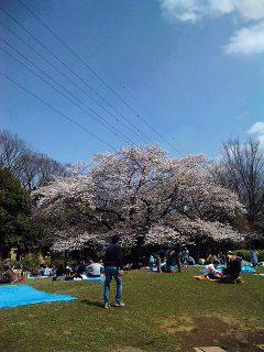 ニッポンの花見_a0103940_1655954.jpg