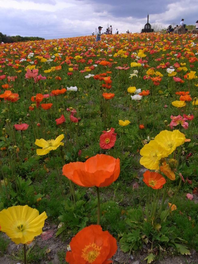 万博公園で花を愛でる_b0017844_171853100.jpg