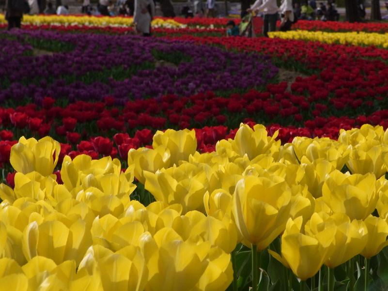 万博公園で花を愛でる_b0017844_17214453.jpg