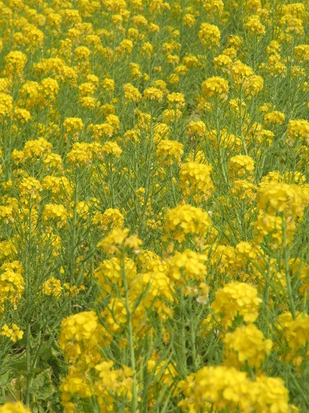 万博公園で花を愛でる_b0017844_21571183.jpg