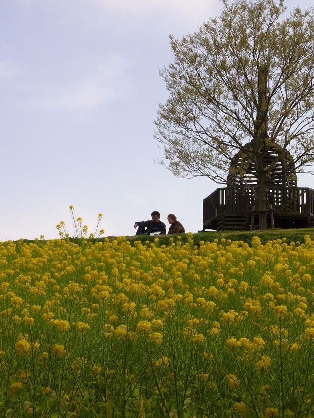 万博公園で花を愛でる_b0017844_21594388.jpg