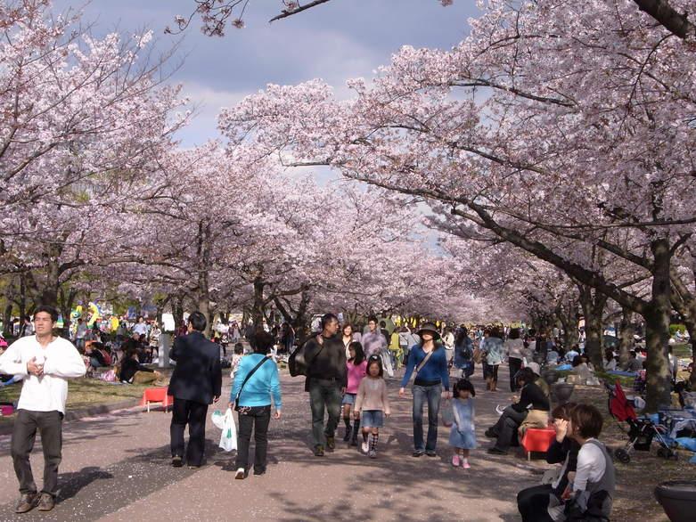 万博公園で花を愛でる_b0017844_2214539.jpg