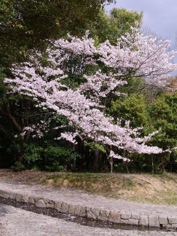 万博公園で花を愛でる_b0017844_2235788.jpg