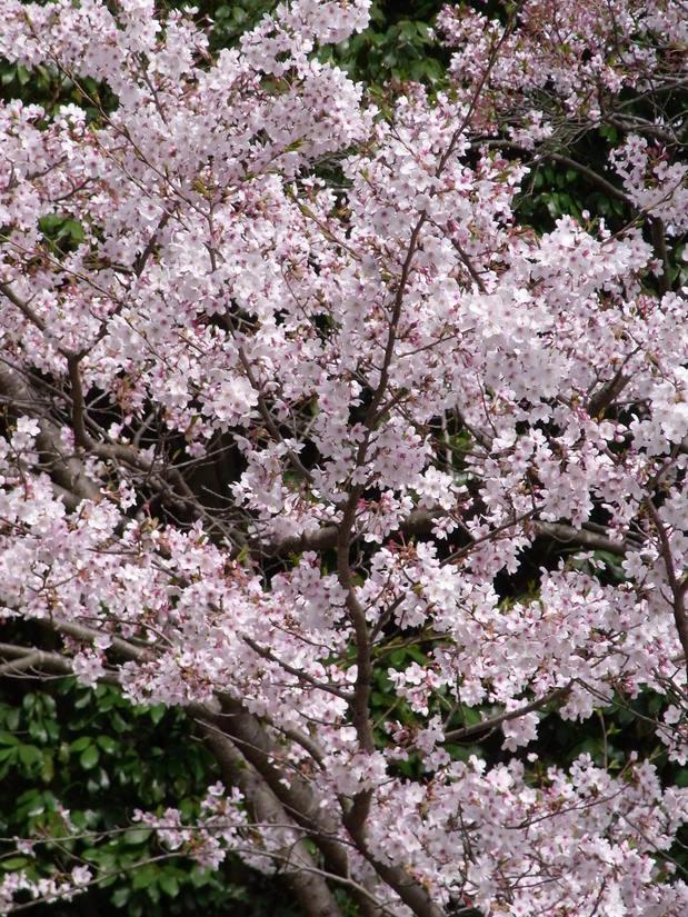 万博公園で花を愛でる_b0017844_2251892.jpg