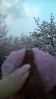 花見をしたぁ〜_e0114246_015171.jpg