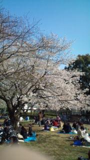 花見をしたぁ〜_e0114246_0151788.jpg