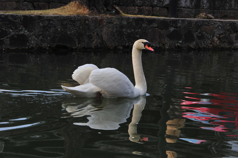 白鳥の羽_e0157647_21173841.jpg