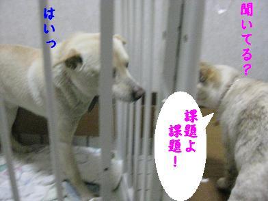 b0151748_1041284.jpg