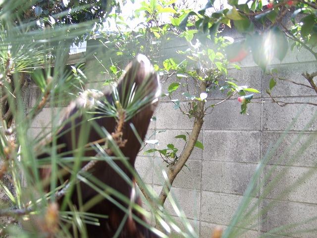 f0071053_201036.jpg