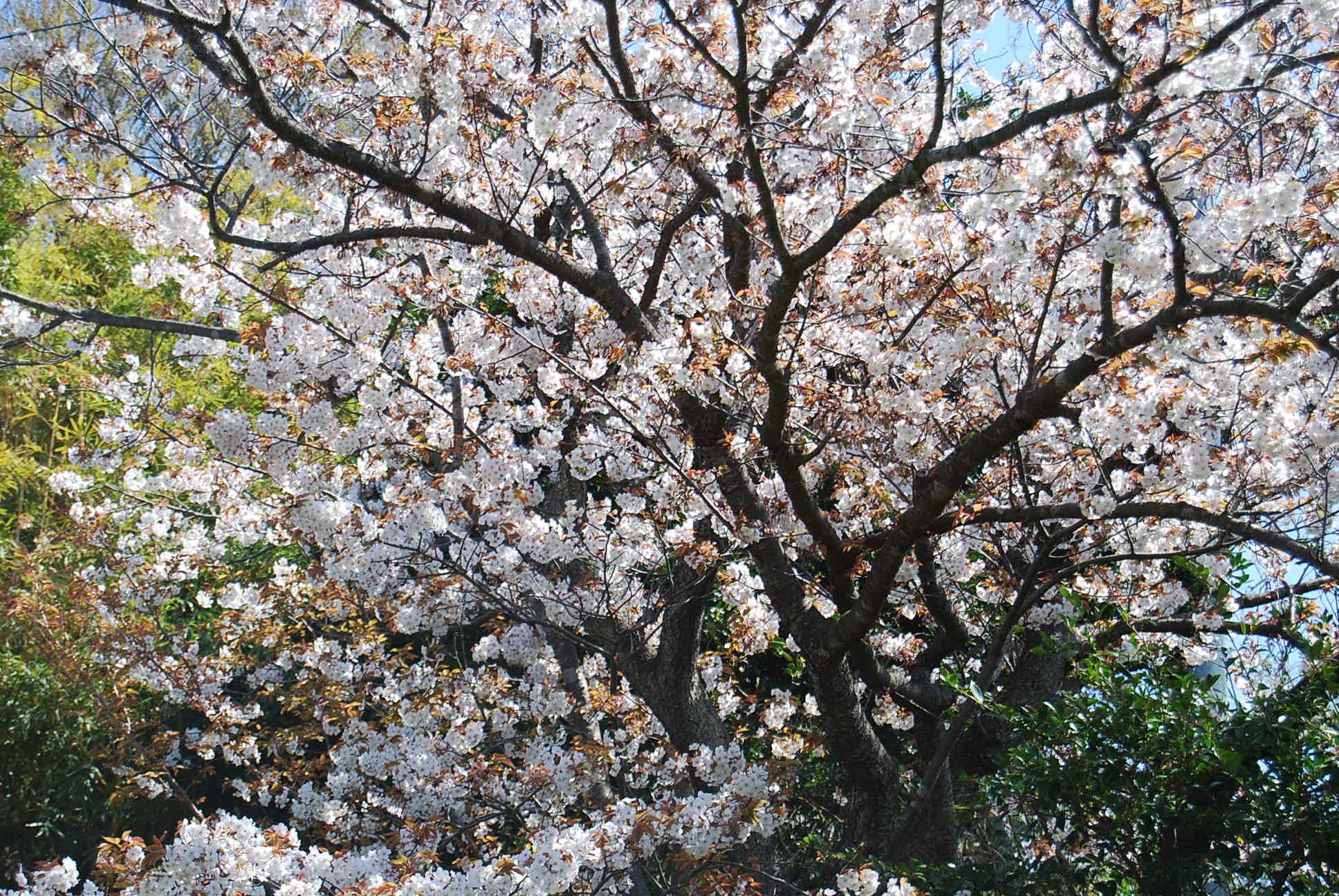 今日の庭_e0142956_0485616.jpg