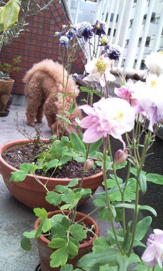 庭の手入れ_e0150362_16351881.jpg